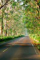 "Tree lined ""Tunnel of Trees"". Eucalyptus. Kauai, Hawaii"