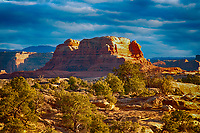 March 14, 2018: The evening's last rays illumine the juniper and pinyon pines that dot the canyon floors of The Needles District, Canyonlands National Park, Utah.