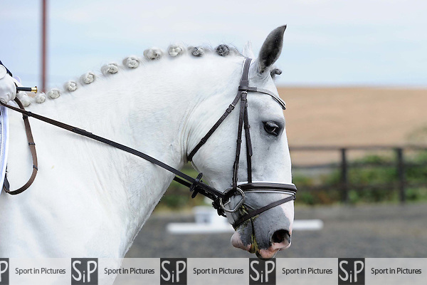 Class 3. Whitehalls farm unaffiliated dressage. Essex. 14/08/2016. MANDATORY Credit Ellen Szalai/Sportinpictures - NO UNAUTHORISED USE - 07837 394578