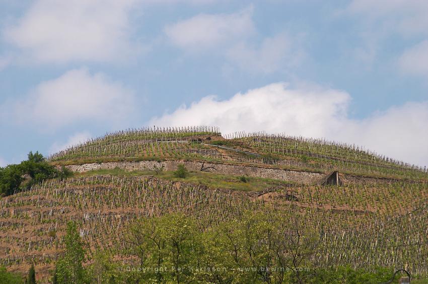 vineyard cote rotie rhone france