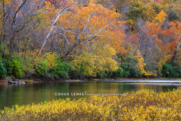 Vibrant colors on an overcast day along the Little Miami River at the peak of autumn, Southwestern Ohio, USA