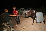 Some Jewish boys are seen with their donkey at the Mitzpe Avichai outpost near the west bank city of Hebron, Tuesday evening July 28, 2009. Mitzpe Avichai is one of the 11 newly-built illegal outposts that were established earlier in the week by the settlers as a response to USA pressure on Israel to freeze construction in the West Bank. Israeli security forces demolished the Mitzpe Avichai outpost late Tuesday night, but the activists have vowed to rebuild it. Photo By: Tess Sheflan / JINI.