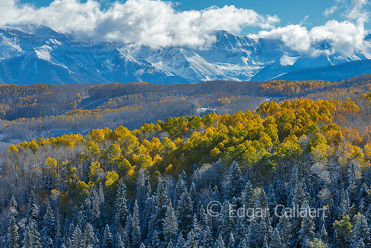 Aspen in Snow, Wilson Mesa, Uncompahgre National Forest, Colorado