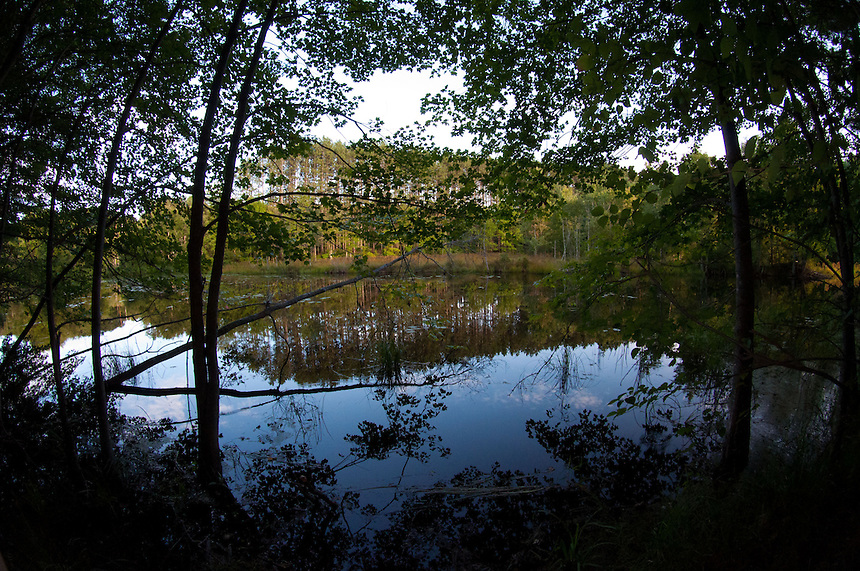 Walker Pond, Wells State Park, Sturbridge, Massachusetts, US