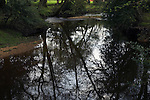 Reflections of trees in Lymington River, Water Corpse Inclosure, near Brockenhurst, New Forest, Hampshire, UK