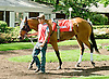 Brushed By Love before The Winter Melody Stakes at Delaware Park on 5/12/12