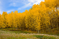 FALL- SAN JUANS NEAR TELLURIDE, COLORADO