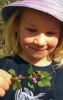 Mädchen, Kind beobachtet eine Hummel auf Taubnessel