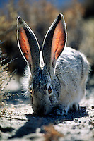 VARIOUS MAMMALS<br />