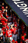 Washington Nationals outfielder Bryce Harper (34) celebrates with his teammates in the dugout following a home run during a game against the Miami Marlins at Nationals Park in Washington, DC on September 8, 2012.