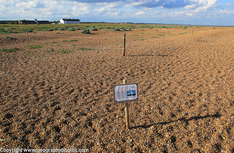 Suffolk Wildlife Trust sign about roped off nesting sites for birds, Shingle Street, Suffolk, England, UK