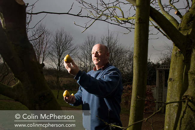 John Budworth, head gardener at Norton Priory in Runcorn, Cheshire, holding some of the quince grown at the priory. Norton Priory is home of the National Collection of Tree Quince (cydonia oblonga, pictured). These are dotted around the garden and the site and include 20 different varieties. It holds an annual quince day for visitors and is on one of the newly-launched Cheshire Food Trails.