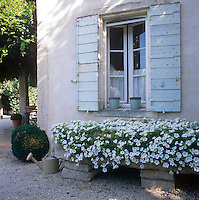 A detail of the exterior  of a country house. A window with blue shutters above a stone planter filled with white trailing flowers.