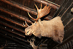 El Tovar Hotel lobby with bull moose and buck deer