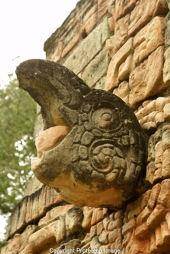 Sculpted macaw on the ballcourt at the Mayan ruins of Copan, Honduras. Copan is a UNESCO World Heritage Site.