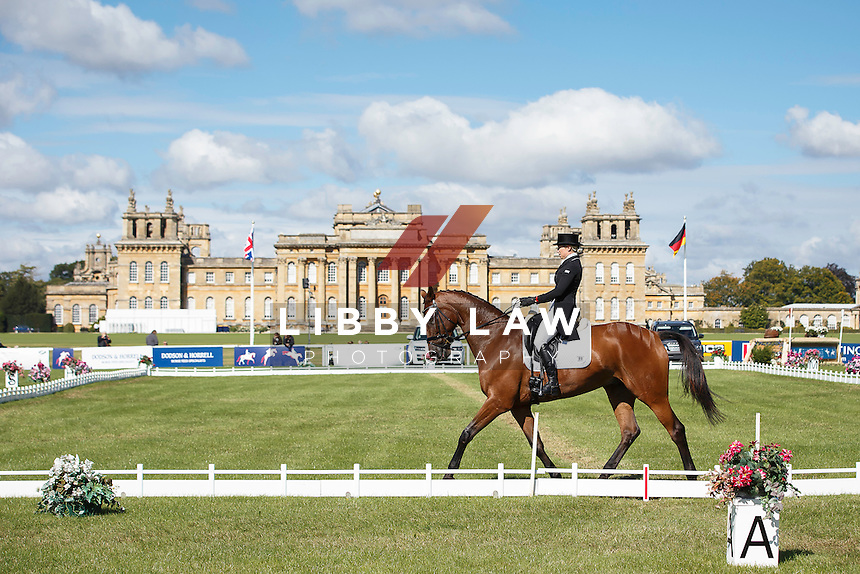 NZL-Megan Heath (ST DANIEL) INTERIM-48TH: CCI3* SECOND DAY OF DRESSAGE: 2015 GBR-Blenheim Palace International Horse Trial (Friday 18 September) CREDIT: Libby Law COPYRIGHT: LIBBY LAW PHOTOGRAPHY