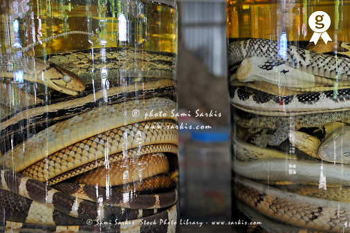 Snakes liquor bottles for sale (Licence this image exclusively with Getty: http://www.gettyimages.com/detail/83154191 )