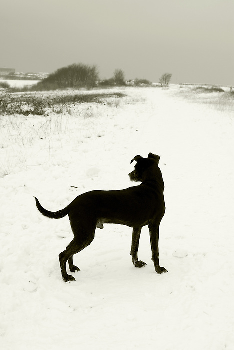 A black dog in a snowy wasteland<br />