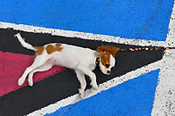 Overhead shot of a dog taking a snooze on the mural.