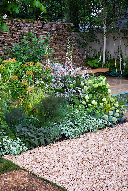 Digitalis, hydrangea, lamium, fennel patio plantings with stone wall, bench, birch trees, patio, lovely serene mixture in backyard garden