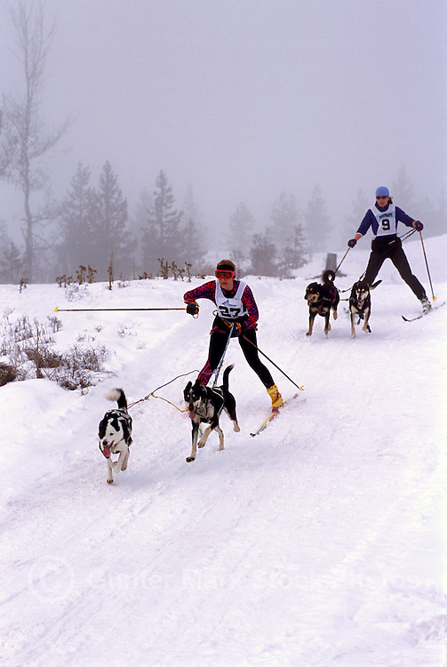 Men skijoring with Dogs in a Race Competition near Falkland, in the North Okanagan Region of British Columbia, Canada
