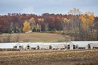 Pagel Mink Farm in Campbellsport, Wisconsin