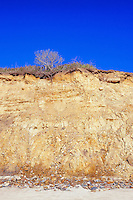 Clay cliffs, Squibnocket Beach, Martha's Vineyard, Massachusetts, USA.