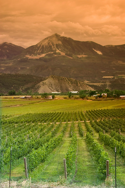 Vineyard of Terror Creek at 6,400 feet in western Rocky Mountains is highest elevation of any vineyard in America.