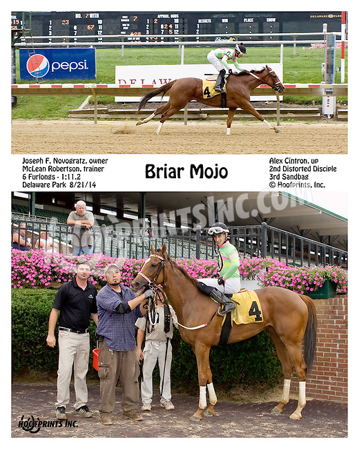 Briar Mojo winning at Delaware Park on 8/21/14