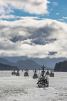 Fleet of commercial fishing seiners relocate during the Sitka Sound Herring Sac Roe fishery, southeast, Alaska.
