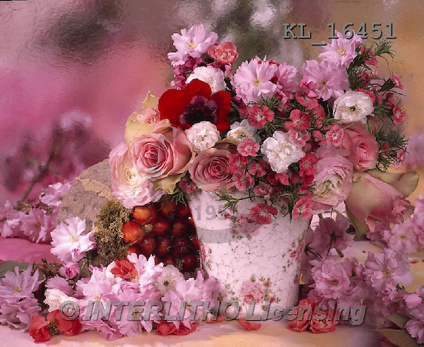 Interlitho, FLOWERS, BLUMEN, FLORES, photos+++++,flowers, pot, pink,KL16451,#F#