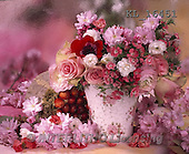 Interlitho, FLOWERS, BLUMEN, FLORES, photos+++++,flowers, pot, pink,KL16451,#F#