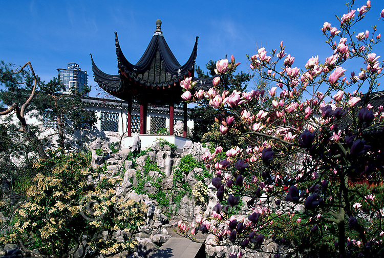 Chinese Pagoda at Dr. Sun Yat Sen Garden, Chinatown, Vancouver, BC, British Columbia, Canada - Spring Blossoms