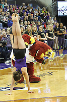 Feb 06, 2015:  Seattle Storm Mascot Doppler looks upside down toward a Washington Gymnasts competing in a hand stand race during a TV timeout at the Washington Vs Oregon State girls basketball game.  Washington defeated Oregon State 76-67 at Alaska Airlines Arena in Seattle, WA.