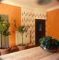 A modern dining room with orange painted walls and a display of single flower vases hung on one wall. The room is simply furnished with a wooden dining table and lime trees in pots.