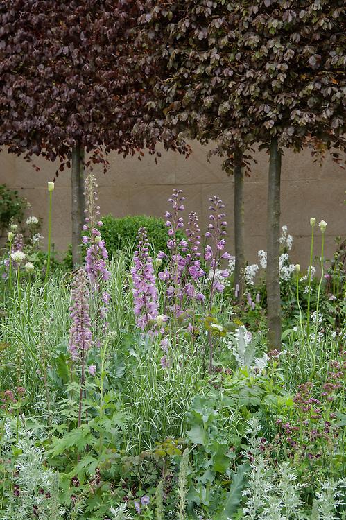 Laurent-Perrier Bicentenary Garden, designed by Arne Maynard, RHS Chelsea Flower Show 2012.Plants include: Centranthus lecoqii, Delphinium requeneii, Hesperis matronalis var. albiflora.