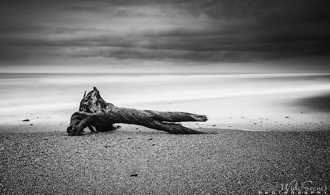Driftwood on the beach of the coastal town of Hokitika on the west coast of the south island of New Zealand