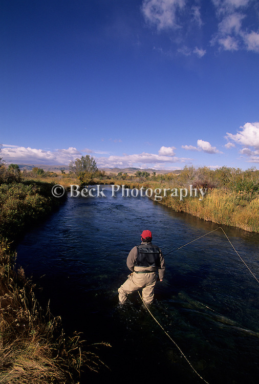 Fly fishing on the O'Dell Spring Creek, Montana