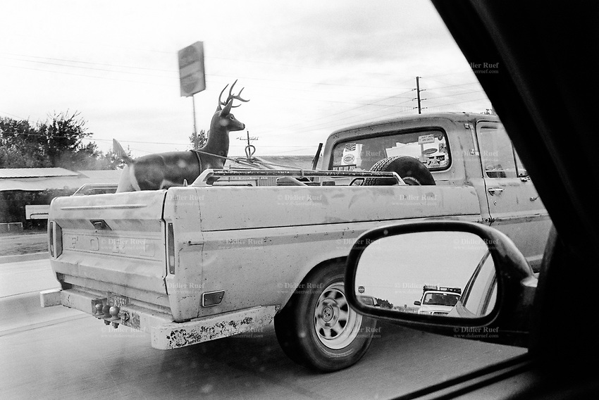 USA. Texas. Dallas. Motorbike Ford pickup truck and fake deer on highway. Outside mirror. Wing mirror. Motor vehicle. In North America, the word pickup generally refers to a small or medium sized truck. The light commercial vehicle features: a separate cabin and rear load area or compartment (separate cargo bed). © 2005 Didier Ruef