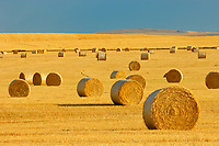 bales at sunrise