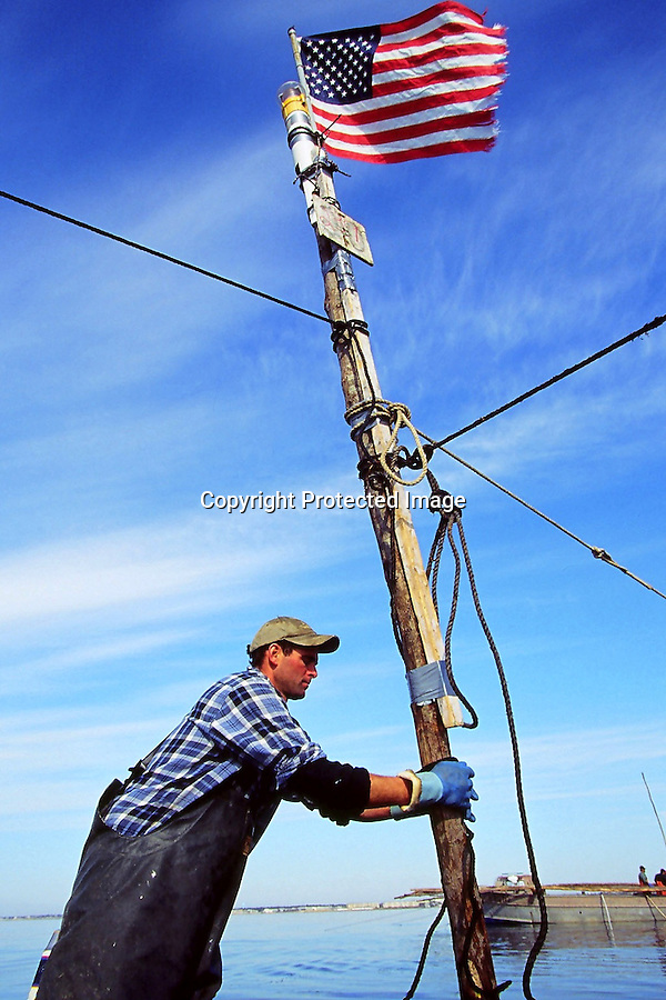 Every year since the terrorist attacks on the World Trade Center, Kurt Martin has attached an American flag to one weir pole at each of his five weir traps. Orleans fisherman, Kurt Martin, owns and operates one of the last weirtrap fishing outfits left on Cape Cod. Weirs are an ancient form of trapping fish. They were used by Native Americans hundreds of years ago and have changed little since. They're an environmentally friendly form of fishing as, unlike in other forms of commercial fishing, undersized fish are not caught alongside adult fish. .