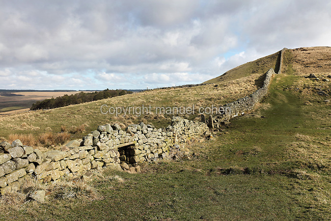 Section of Hadrian's Wall East of Cawfields Wall and South of Cawburn, with stone gateposts and sheep holes, Northumberland, England. Hadrian's Wall was built 73 miles across Britannia, now England, 122-128 AD, under the reign of Emperor Hadrian, ruled 117-138, to mark the Northern extent of the Roman Empire and guard against barbarian attacks from the Picts to the North. The wall was fortified with milecastles with 2 turrets in between, and a fort about every 5 Roman miles. This section of the Wall is in the Northumberland National Park, managed by English Heritage, and the Hadrian's Wall Path, an 84-mile coast to coast long distance footpath, runs alongside it, along with the Pennine Way. Picture by Manuel Cohen