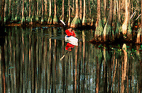 Sports kayaking in a swamp.