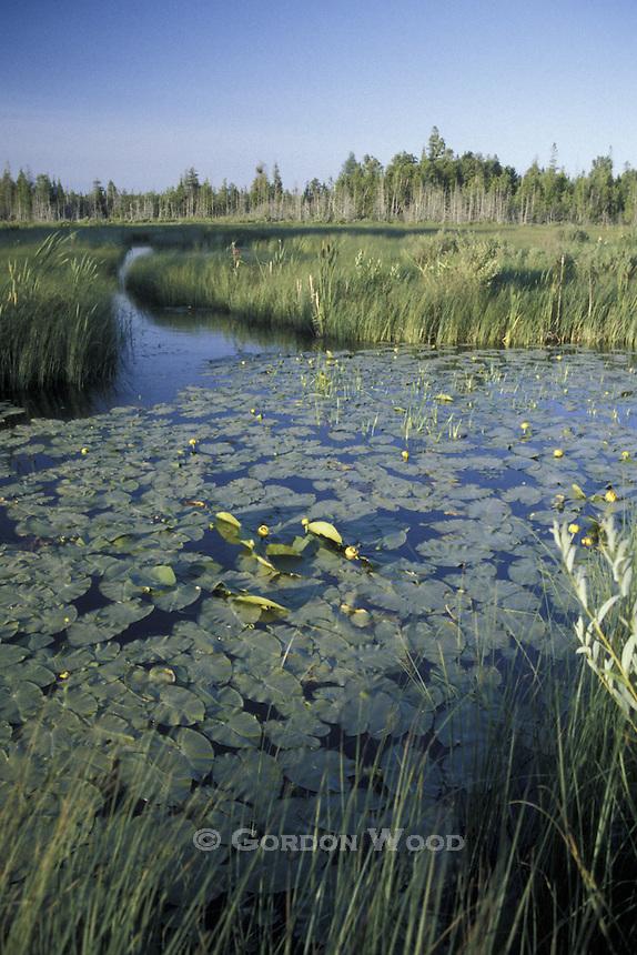 Wetland Bruce Peninsula