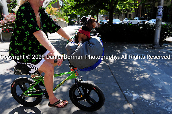A man rides his bike with his pet daschund down 4th Avenue near Myrtle Edwards Park, on day 2 of Hempfest Sunday August 16, 2009. Photo by Daniel Berman/SeattlePI.comduring day 2 of Hempfest at Myrtle Edwards Park Sunday August 16, 2009. Photo by Daniel Berman/SeattlePI.com