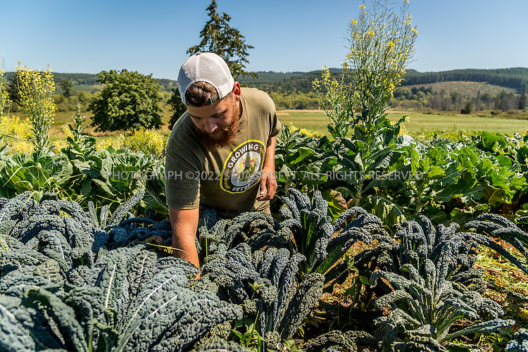 8/12/2016-- Mount Vernon, WA, USA<br /> <br /> Staff from the Schultz Family Foundation visit the Growing Veterans farm in Mt. Vernon, Washington, about an hour north of Seattle.<br /> <br /> <br /> Here, veteran Collin Mcinnes, 27 works on the farm.<br /> <br /> From http://growingveterans.org:<br /> <br /> &ldquo;Since 2012, Growing Veterans has been combining veteran reintegration with sustainable agriculture. Our unique model addresses the growing desire for alternative therapies for Post-Traumatic Stress (PTS) and Traumatic Brain Injury (TBI), as well as suicide prevention through peer-support and Applied Suicide Intervention Skills Training (ASIST) certification. We encourage continued service through volunteerism, and collective impact through collaboration with other local, regional, and national stakeholders.&nbsp; We provide opportunities for vets in transition to develop their resumes and identify how to translate skills learned in the military to new roles in the civilian sector. Further, our vets serve as leaders in the important movement toward sustainable agriculture&rdquo;<br /> <br /> Photograph by Stuart Isett. &copy;2016 Stuart Isett. All rights reserved.