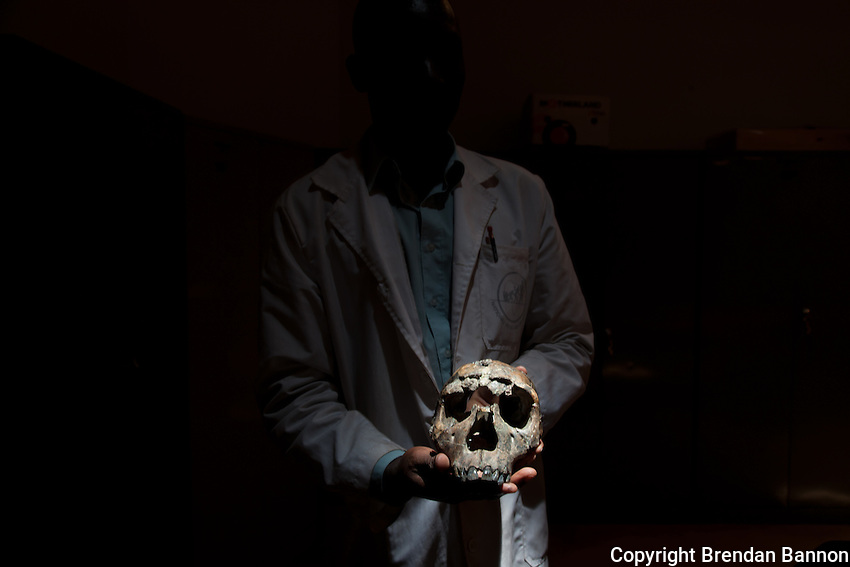 Tom Mukhuyu, collections assistant at the National Museums of Kenya, holding the skull of Turkana Boy the most complete skeleton of Homo erectus, an early human dating back 1.5 million years.