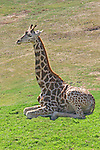 IMAGES OF SAN DIEGO, CALIFORNIA, USA, WILD ANIMAL PARK