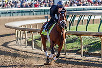 LOUISVILLE, KENTUCKY - MAY 02: Patch, owned by Calumet Farm and trained by Todd Pletcher, exercises in preparation for the Kentucky Derby at Churchill Downs on May 2, 2017 in Louisville, Kentucky. (Photo by Jesse Caris/Eclipse Sportswire/Getty Images)