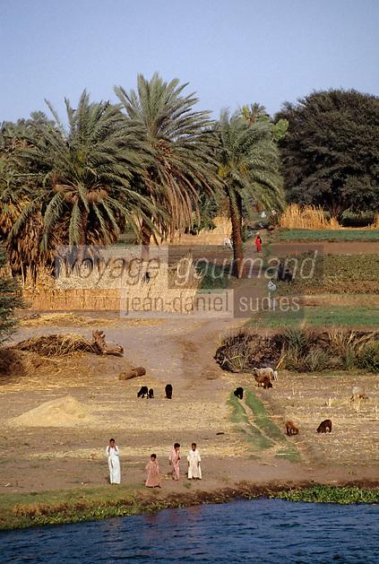 Afrique/Egypte/Env de Louxor/Ancienne Thèbes: scène de vie villageoise. Travaux des champs sur les bords du Nil